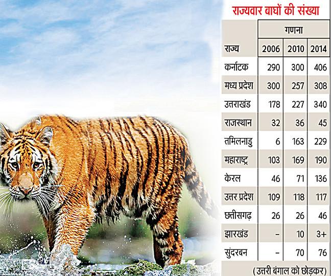 International Tiger Day.