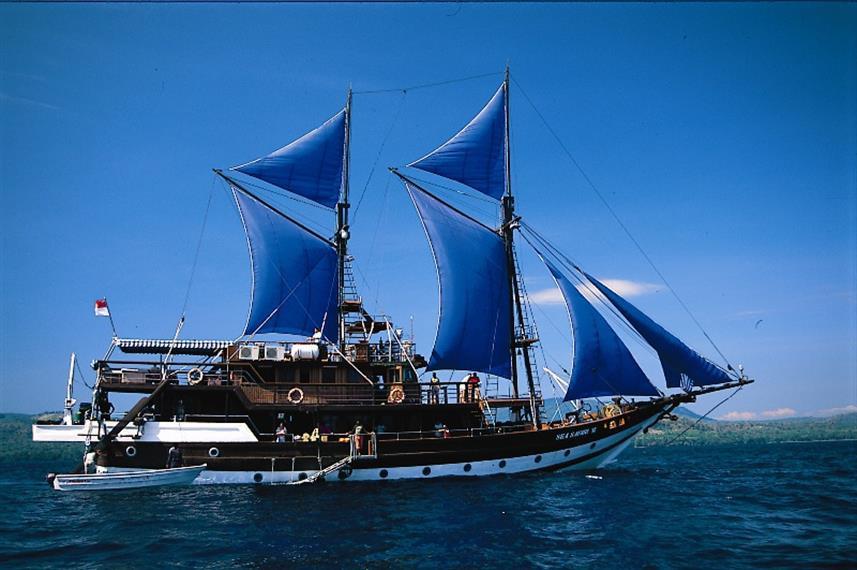 Sea Safari VI.jpg