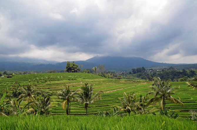Subak - The Irrigation System Used in Bali's Rice Terraces