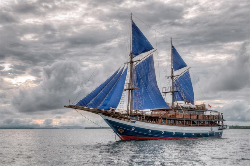 Sea Safari VIII.jpg