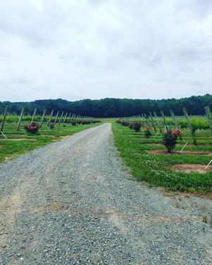 Childress Vineyards