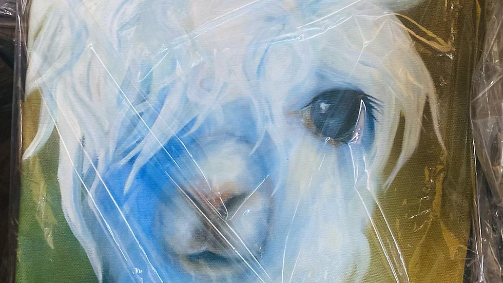 Alpaca on canvas paintings