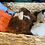 Thumbnail: Alpaca fur bunnies