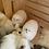 Thumbnail: Peru Stuffed Animals
