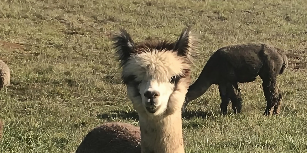 Alpaca Open House -this open house is canceled .