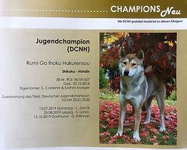 DCNH Clubnachrichten 02/2020