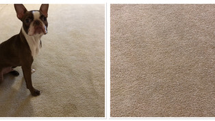 Pet Stain and Odor Removal Phoenix