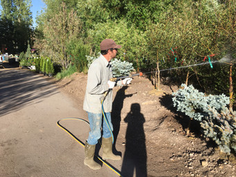 Greenleaf Tree Care Services