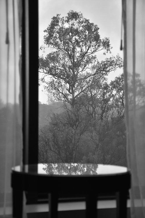 Cuadro Fotografía de Autor - Parque 9 de Julio Tucumán - Ed. Limitada 1/12