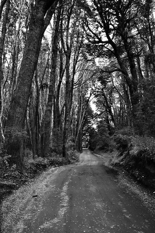 Cuadro Fotografía de Autor - Villa Tacul - Bariloche - Ed. Limitada 1/12