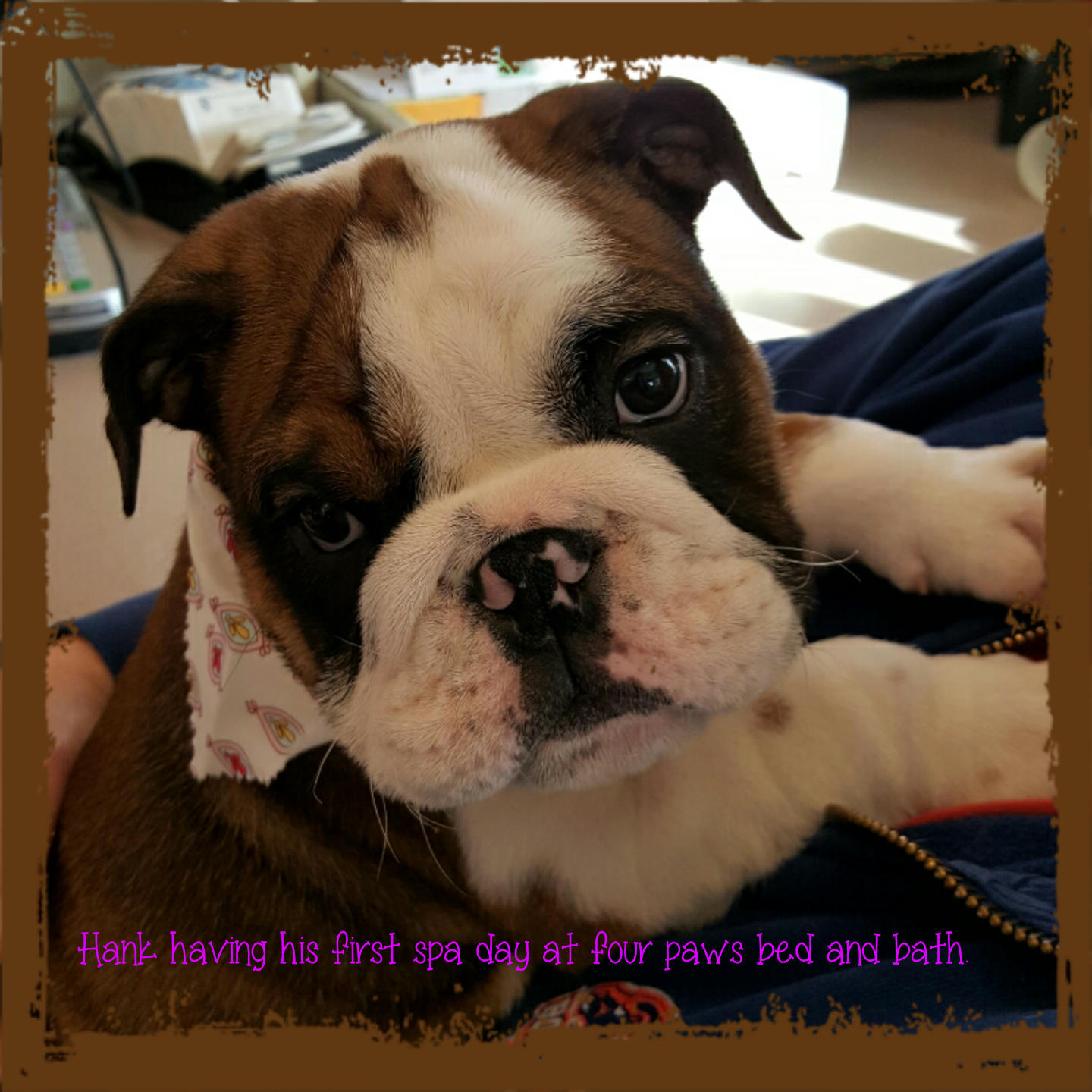 HANK TWISS, 10 WKS