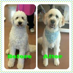 duke before & after