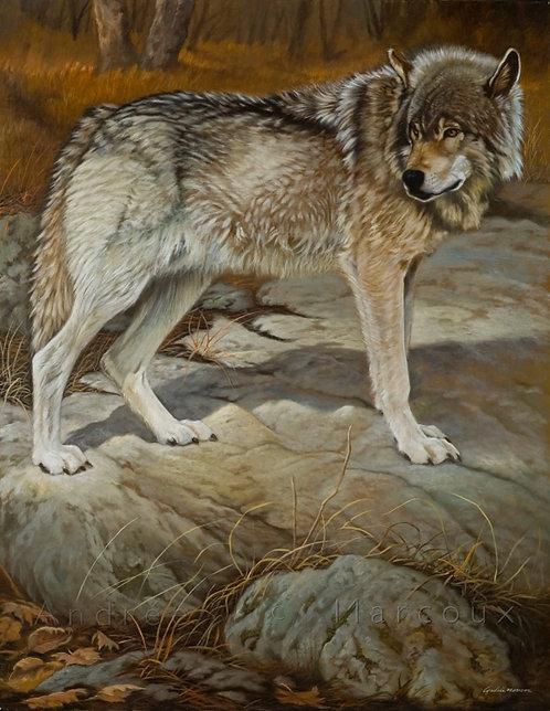 Peinture de Andrée Marcoux-art animalier québec canada