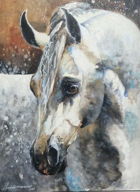 Art Cheval blanc de Andrée Marcous-art animalier Québec Canada