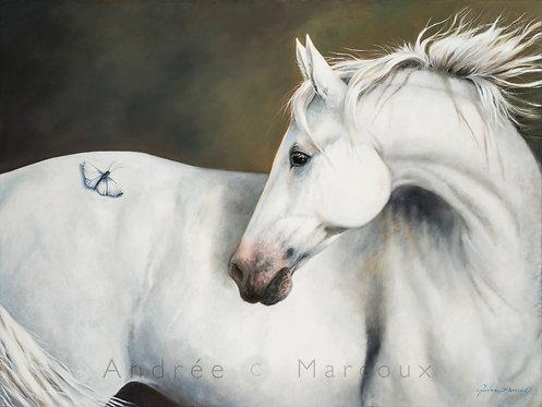 Peinture cheval blanc de Andrée Marcoux-art animalier contemporain-art équestre