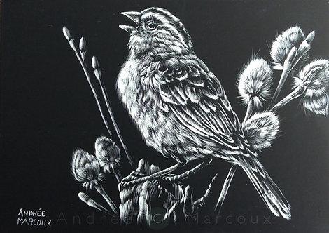 Reproduction  de Andrée Marcoux-art animalier Québec Canada