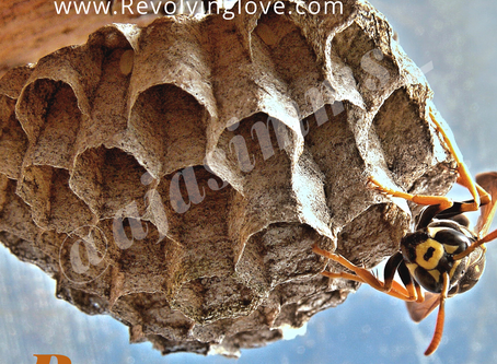 Spiritual Meaning of #Wasp