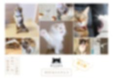 WEBねこにすと-2.jpg