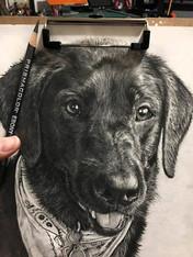 Black Pup B1.jpg