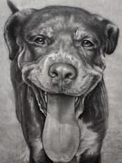 Sampson Final AAB Allen Boyles Art.jpg
