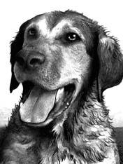 Clyde the Dog copy.jpg