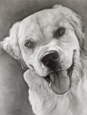 Yuzu the Pup.jpg