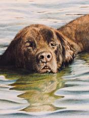 Teddy Final AAB Allen Boyles Art.jpg