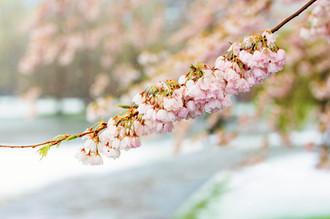 BostonBloom&Snow_04.JPG