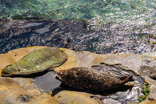 La Jolla 2. Seal Rock