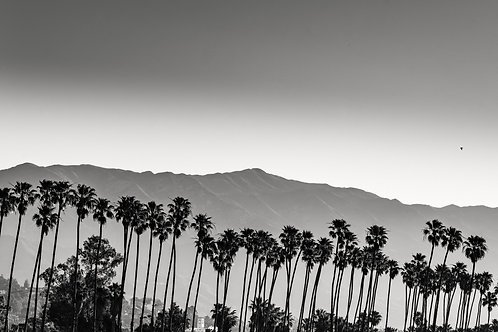 Chase Palm Park. BW