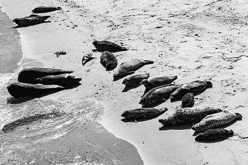 La Jolla. Seal Rock
