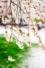 BostonBloom&Snow_18.JPG