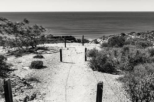 Torrey Pines Views. BW