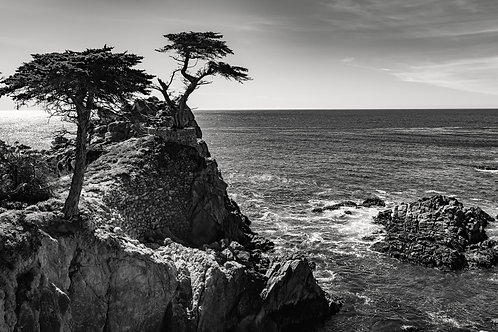 Lone Cypress. BW