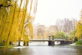 BostonBloom&Snow_19.JPG