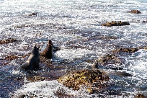 La Jolla - The seals. Color