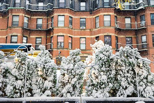The Snow on Newbury Street 3