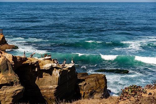 La Jolla - The birds. Seal Rock