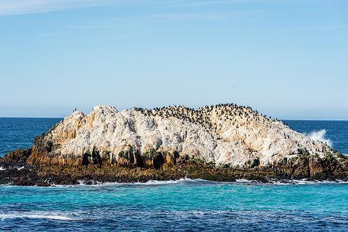 Bird Rock Vista Point