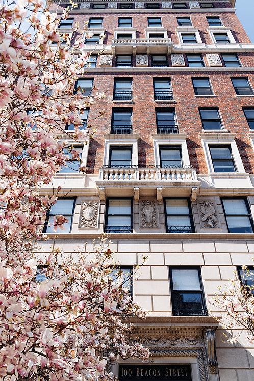 The Blossom Tree. V2