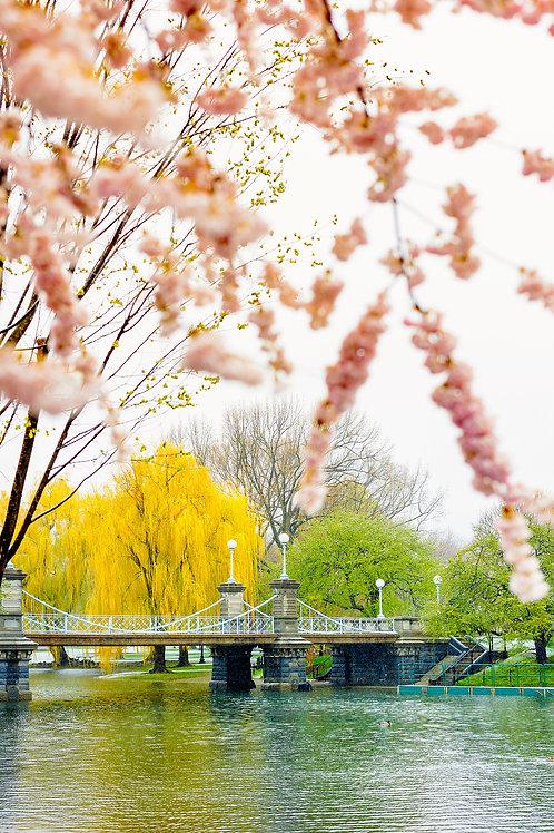 The bridge - Spring Colors