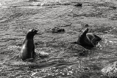 La Jolla - The seals