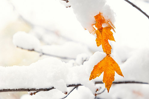 Winter Colors 2