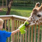elmwood zoo.jpg