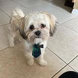 dog with tie.jpg