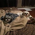 Jack and Ella bed.jpg