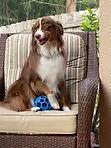 dog on porch chair.jpg