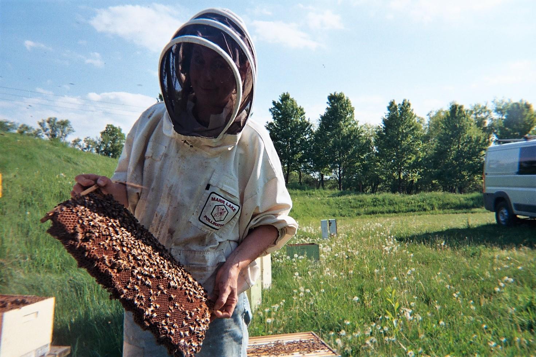 Lotsa Dandies Make Strong Hives