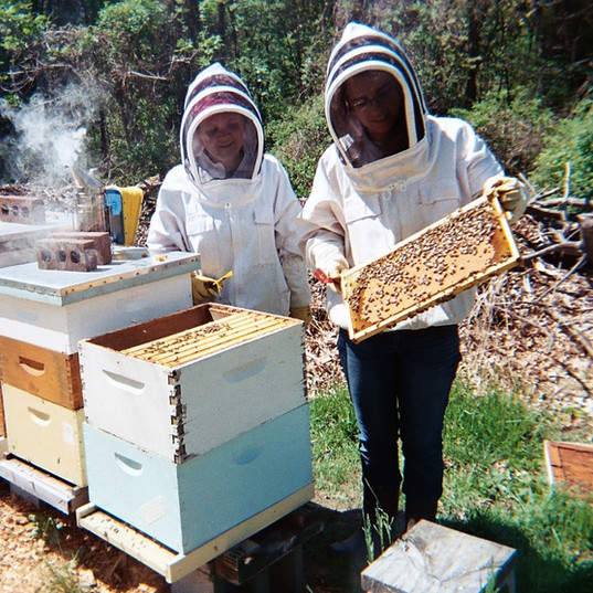 Learning By Bee-ing
