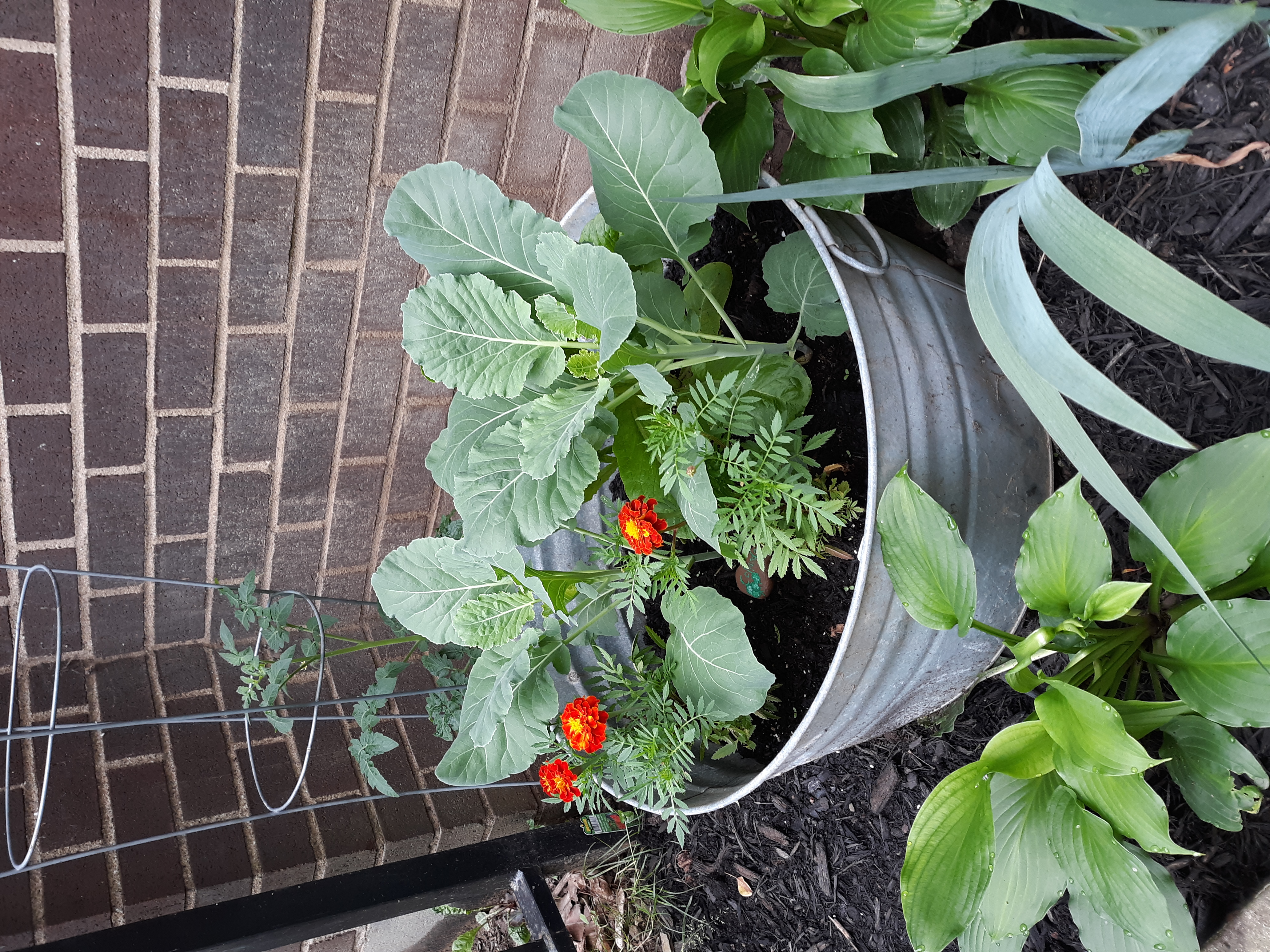 Container Gardening at its Best